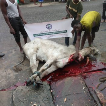 Slaughtering Of Cow for Eid